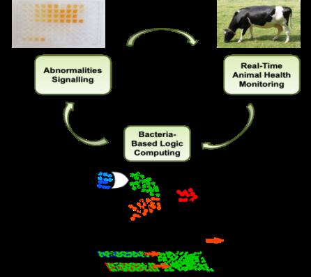 Engineering Computing Devices Using Bacteria Natural Signaling Systems | VistaMilk