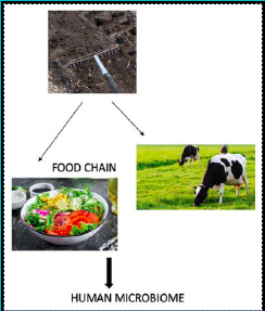 Antibiotic resistance: from soil to food chain | VistaMilk